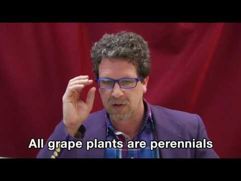 Lecture 6: In the Vineyard (Grape #4)