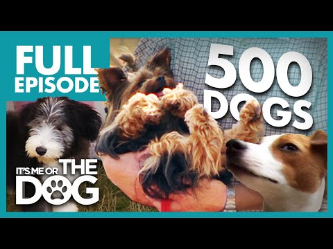 Training 500 Dogs: The Event | Full Episode | It's Me or the Dog