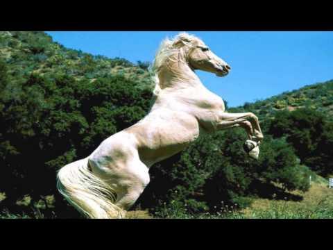 Le cheval blanc ( Hugues Aufray )