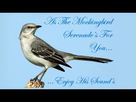 BEST Northern Mockingbird (Mimus polyglottos) Singing at night June 29, 2012