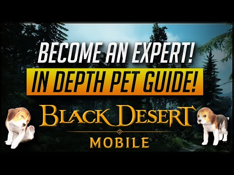 [Global] In Depth Pet Guide!! Everything You Need To Know About Pets!   Black Desert Mobile