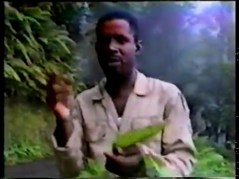 BUSH MEDICINE in Trinidad
