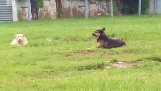 Собаки с бирками Нижний Новгород