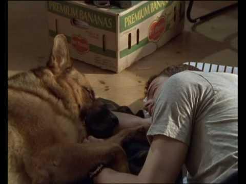 Rex chien flic - La rencontre Rex et Alex