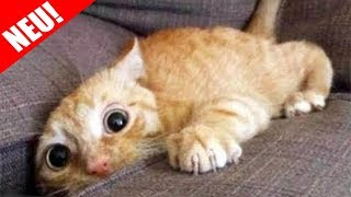 Top 500 Lustigsten Tiere Videos | Versuche nicht zu Lachen oder zu Grinsen 2018!