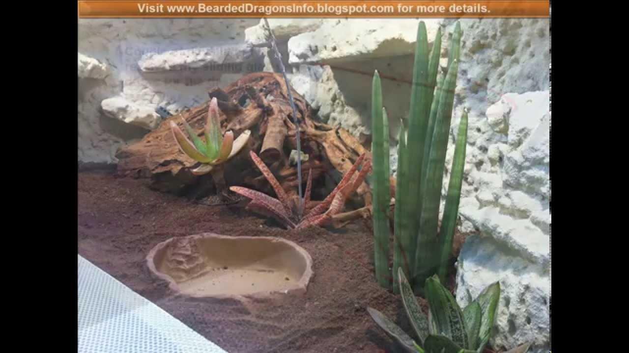 build  desert terrarium   bearded dragon