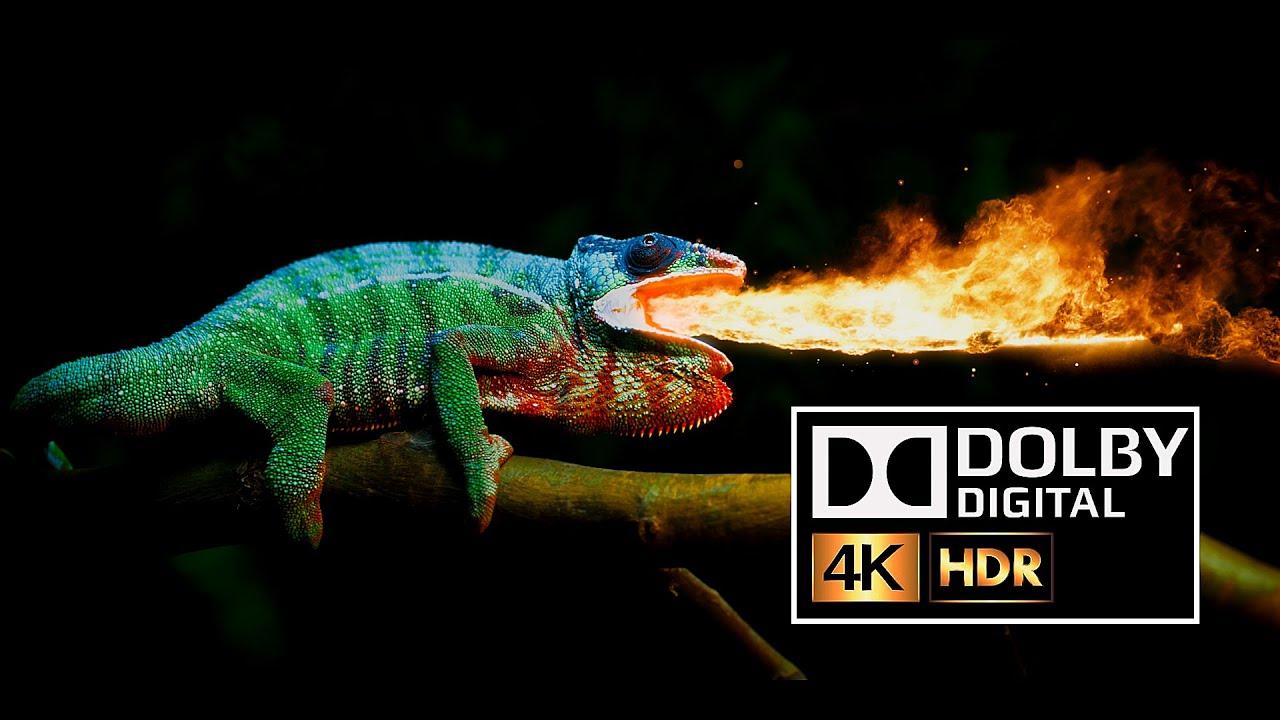 Dolby Atmos Test video Chameleon 4k ULTRA HD HDR 10BIT [ HD ]