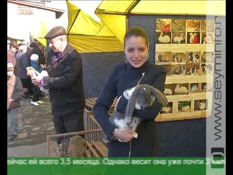 В областном центре прошла ярмарка домашней птицы и кроликов