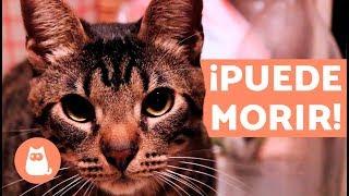 10 cosas que pueden matar a tu gato y que tienes en casa