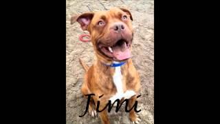 Jimi @ Www.rochdale-dog-rescue.com