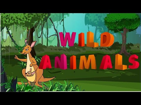 """different kinds of """"wild animals"""" with animation and pictures"""