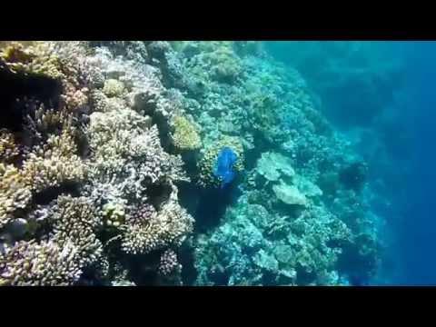 Red sea Snorkeling.Iberotel club fanara & residence. Egypt 2015