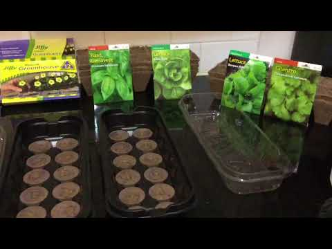 Germinate Seeds using Jiffy pellets in your NY Apartment