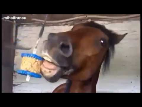 Смешные картинки с лошадьми » Сайт о лошадях