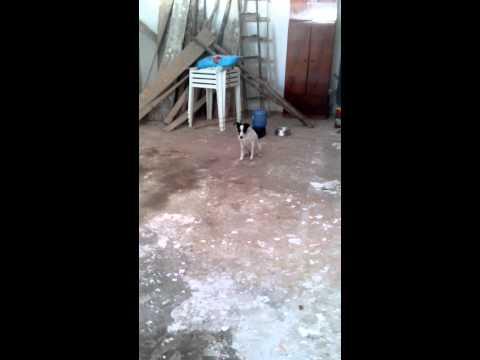 Adestramento de cães Viel Pet