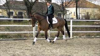 I&H Graceful-flower / 4 years old mare/