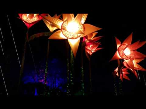 RHS Garden Wisley Christmas Glow 2016 - Night Illumination