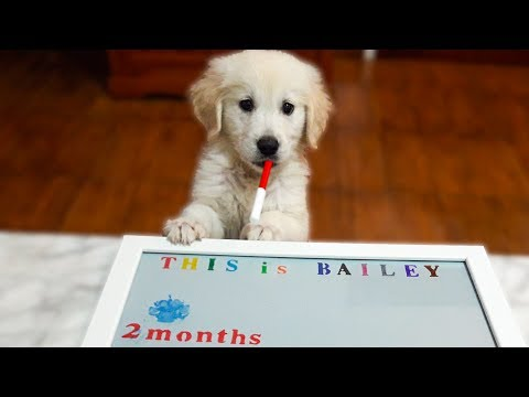 Cute Puppy Writes the Name of His Youtube Channel - This is Bailey