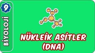 Nükleik Asitler (DNA)   9.Sınıf Biyoloji