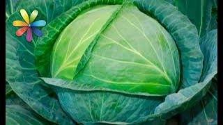 О пользе всех видов капусты рассказала диетолог Светлана Фус (повтор)