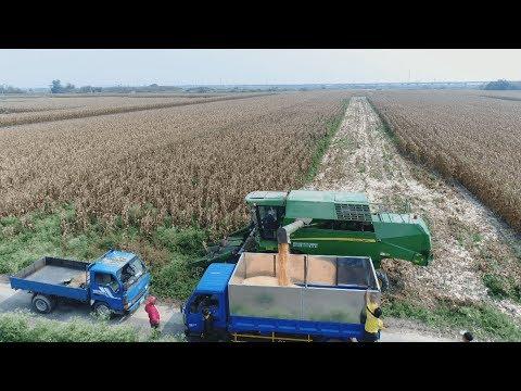 Download Youtube: 我們的島 第911集  本土玉米1%的挑戰 (2017-06-19)