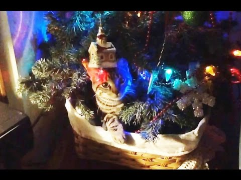 """Cats vs. Christmas Trees Compilation"" 