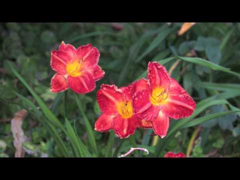 The Gardens of Norfolk Island