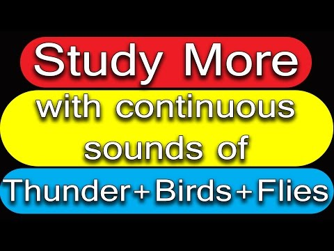 WHITE NOISE for Studying | Sounds of Thunder Birds Flies 11 hours | No Ads in-between |