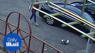 RSPCA hunts for thug seen on CCTV kicking a seagull to death