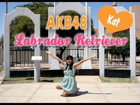 Hello!Pinku Dance cover solo  AKB48- Labrador Retriever