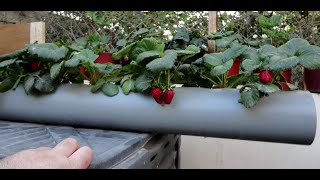 Strawberry Pipe Planter