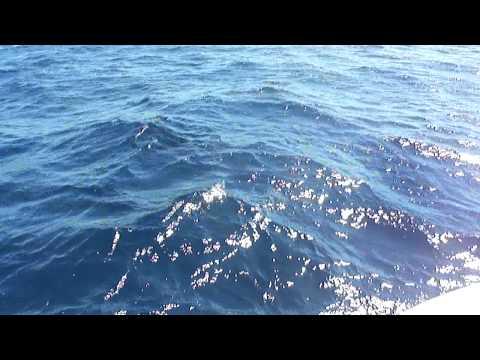 Catchin my First Sailfish with Captains BJ Meyer and Bucko Platt!!!