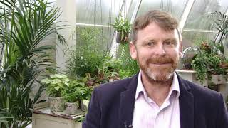 Rise In House Plants Story - ITV News