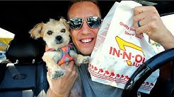 FAST FOOD OK FOR DOGS?!