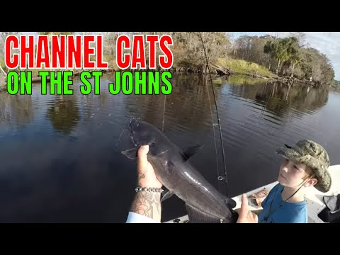 CATCHING FRESHWATER CHANNEL CATFISH IN THE ST. JOHNS RIVER