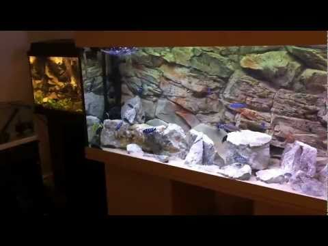 MY AFRICAN CICHLID TANKS - A CLOSER LOOK [HD]