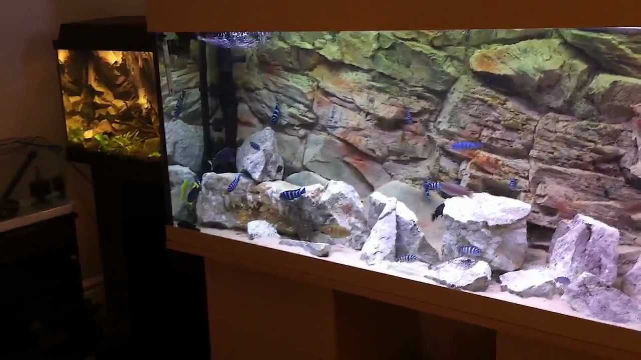 My african cichlid tanks a closer look hd youtube for African cichlid tank decoration