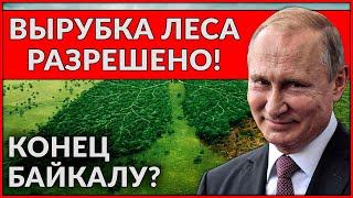 Что творится на Байкале. Приняли закон о вырубке леса и продают китайцам!