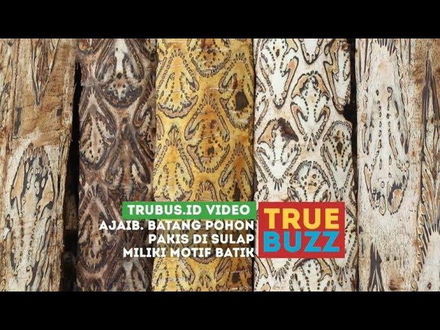 Keajaiban Batang Pohon Pakis, Punya Motif Batik