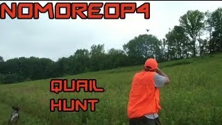 Bird (quail) Hunting In Pennsylvania With A German Shorthaired Pointer
