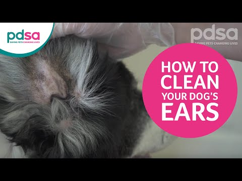 PDSA Vet Advice: How To Clean Your Dog's Ears And Recognise Ear Problems