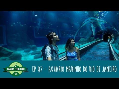 AQUARIO: O QUE FAZER NO AQUÁRIO MARINHO DO RIO DE JANEIRO #07