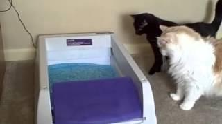 Изучаем самоочищающийся лоток для кошек - rukot.com
