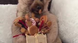Dog in Bear Suit, relax and enjoy
