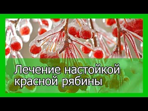 Черноплодная рябина Полезные и опасные свойства