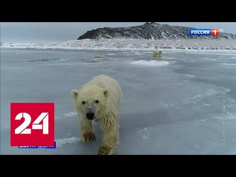 День белого медведя: