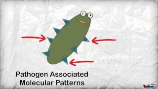 Introductory Immunology - Basics of antibody production