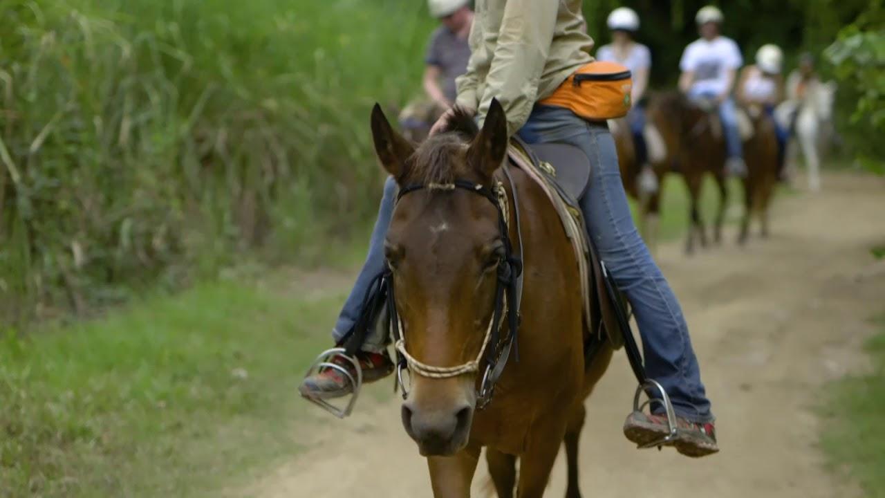video Blazing Saddles Horse Riding