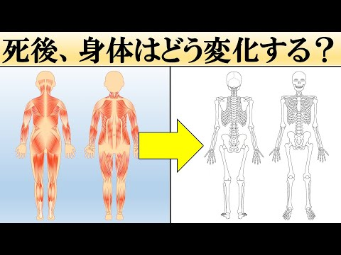 【科学】人は死ぬとどうなる?【死後の身体の変化】