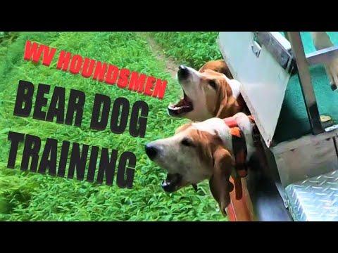 SUMMER BEAR DOG TRAINING - TWO HUNTS